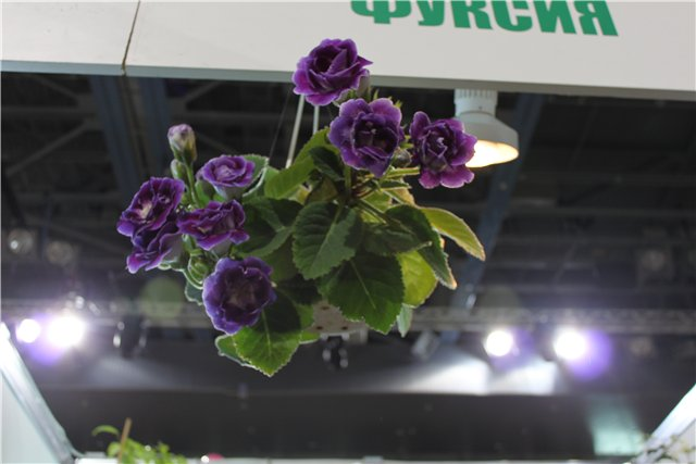 Выставка: Ландшафт и приусадебное хозяйство 2013, Алматы. D03b65eed678