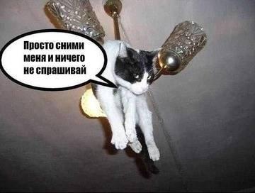 Сама по себе гулёна (о кошках) - Страница 2 Cbb3a574b417