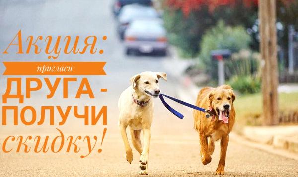 Интернет-магазин Red Dog- только качественные товары для собак! - Страница 3 F8f7a6da6bd8