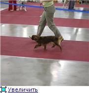 """""""ЕВРАЗИЯ-2012"""" 563585d05344t"""