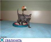 Донские сфинксы D0bb2665ccect