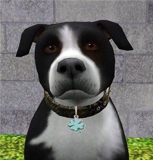 Собаки - Страница 7 A301a61ea5da