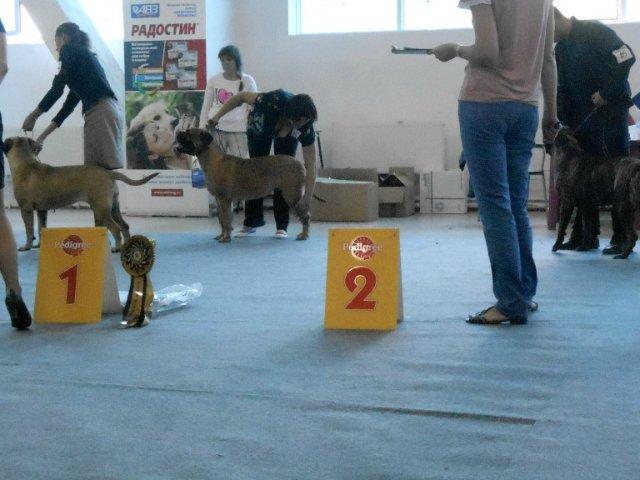 16 августа 2014г. Челябинск две выставки в один день- CACIB и МОНОПОРОДКА!!!! - Страница 7 7924f57016bd