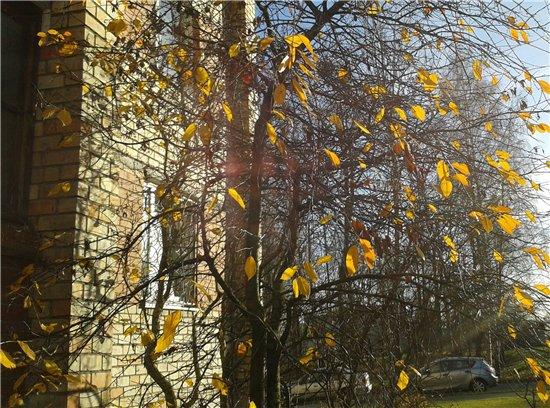 Осень, осень ... как ты хороша...( наше фотонастроение) - Страница 7 210702561a51