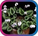 продам семена экзотических растений - Страница 3 C890a9c3e1ab