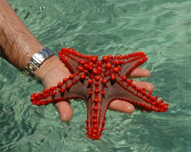 Морская звезда Be36f5710176