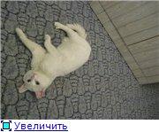 Наши любимые животные - Страница 3 E72afaa13cc1t