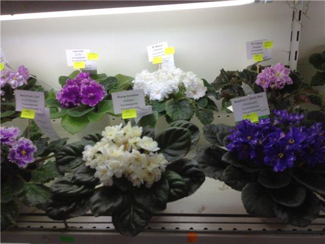 Выставка цветов 026464787822