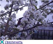 Расцветали яблони и груши... 3f4bd250aa76t