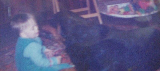 """Питомник """"Прима Персона"""". Мои собаки-моя жизнь! 9877910700a6"""