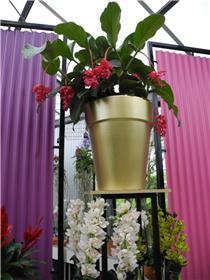 Рай тюльпанов или Кёкнхов - 2012 Bcd1acfc43f9t