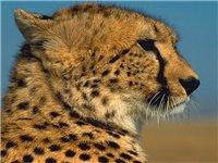 Животные 9ede47c8312c