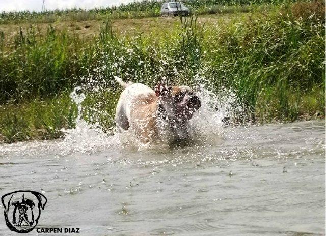 Собаки питомника Carpen Diaz - Страница 2 1c9cd15cabc9