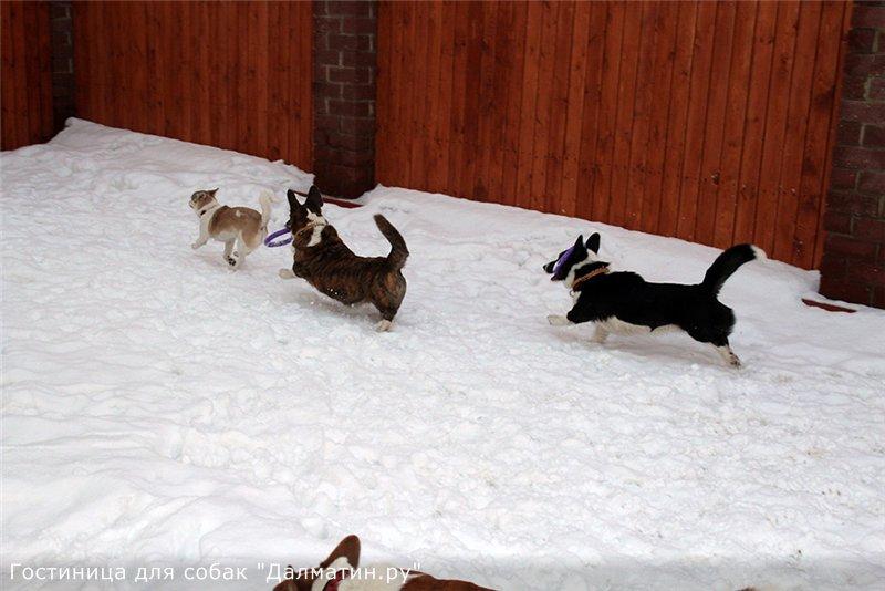 Семейная гостиница для собак в Дедовске (передержка) 8c9bbb2dd9e7