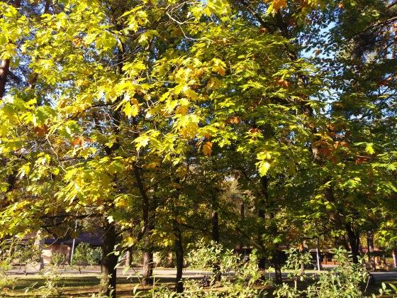 Осень, осень ... как ты хороша...( наше фотонастроение) - Страница 8 1d062ac19fb2