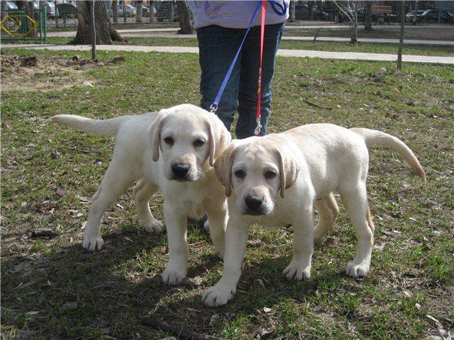 Наши щенки - Страница 7 9faa01586264