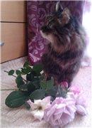 Кошки из бамбука и акрила - Страница 4 6fec673e23b1t