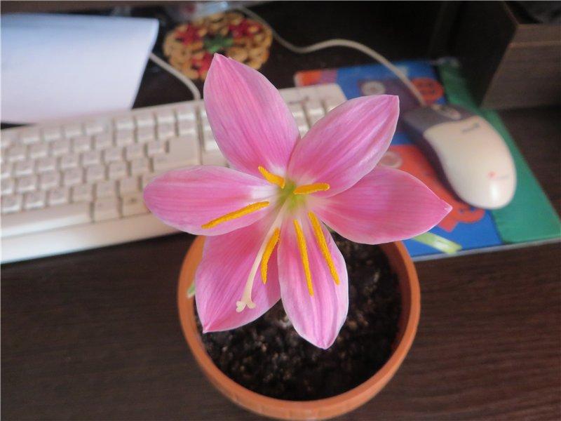 """Мои цветочки ... Занятие для души)))""""  C86627955185"""