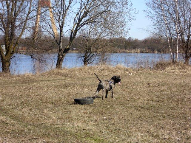 Собаки Татьяны Моисеенковой, кот Мензурка - Страница 3 Cec611547cf6