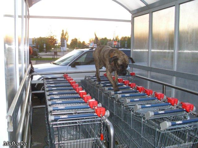 Собаки Татьяны Моисеенковой, кот Мензурка - Страница 4 811560f2767b