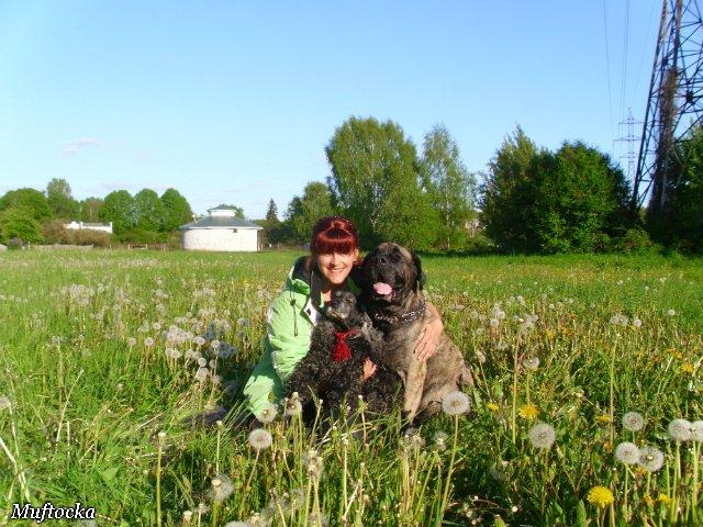 Собаки Татьяны Моисеенковой, кот Мензурка - Страница 4 54f27fdfb0ea