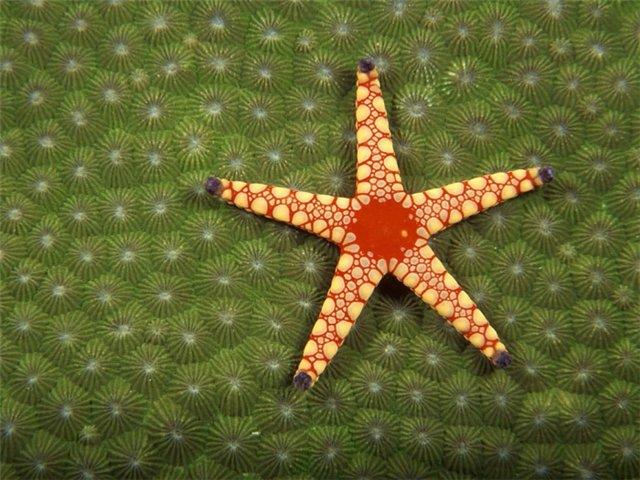 Морская звезда Aad59d6f5aec