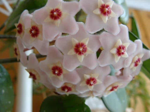 Мои цветочки - Страница 40 775e26cfe522