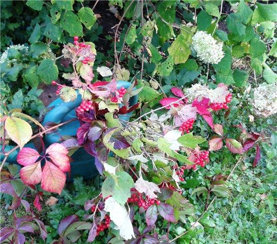 Осень, осень ... как ты хороша...( наше фотонастроение) - Страница 4 5a41e8544ecf