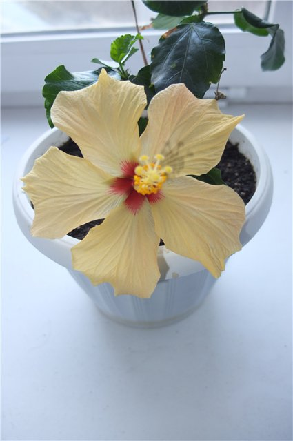 Наши любимые домашние растения! - Страница 2 8f9c5dd71087