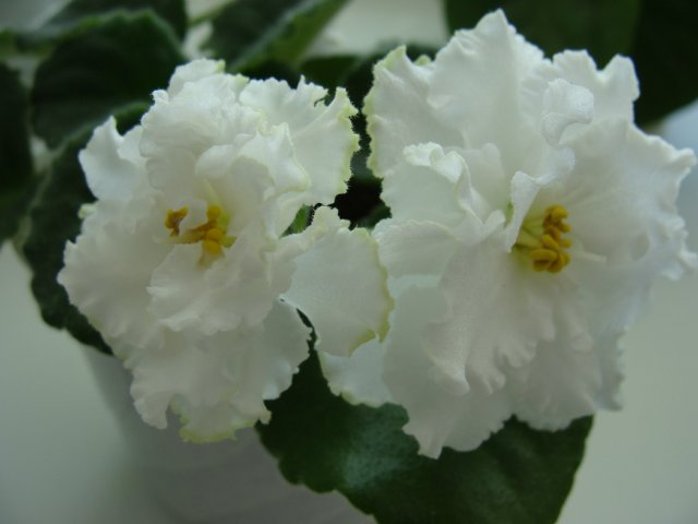 Мои цветочки - Страница 39 395f00478cc8