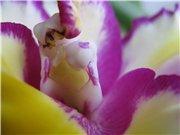 Странности и интересности наших орхидей - Страница 7 455e716d70c9t