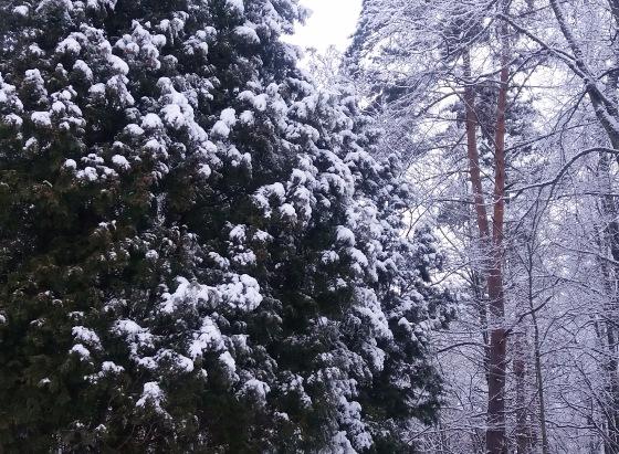 Зимняя сказка на наших фотографиях - Страница 14 Cd6172671795