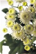 Цветы (flowers) E451ce43d0eat