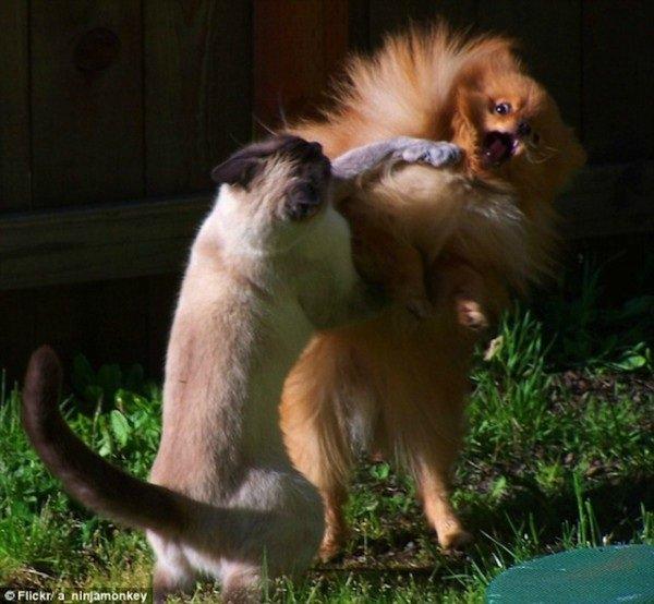 Забавные животные - Страница 3 Aa986a241465