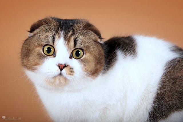 Кошки-Коты-Котята 65c992fd4466