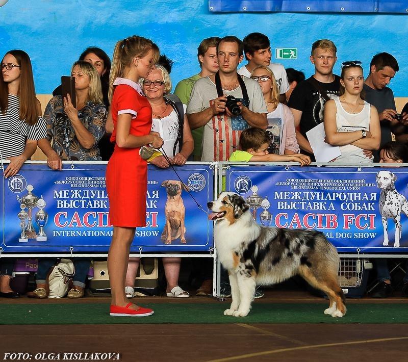 Выставочные успехи наших собак - 5 - Страница 30 F9f699c06272