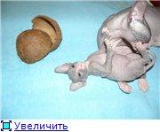 Донские сфинксы 60be09b8bf56t