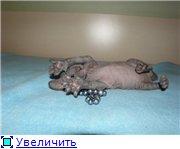 Донские сфинксы 5f470190c8ddt