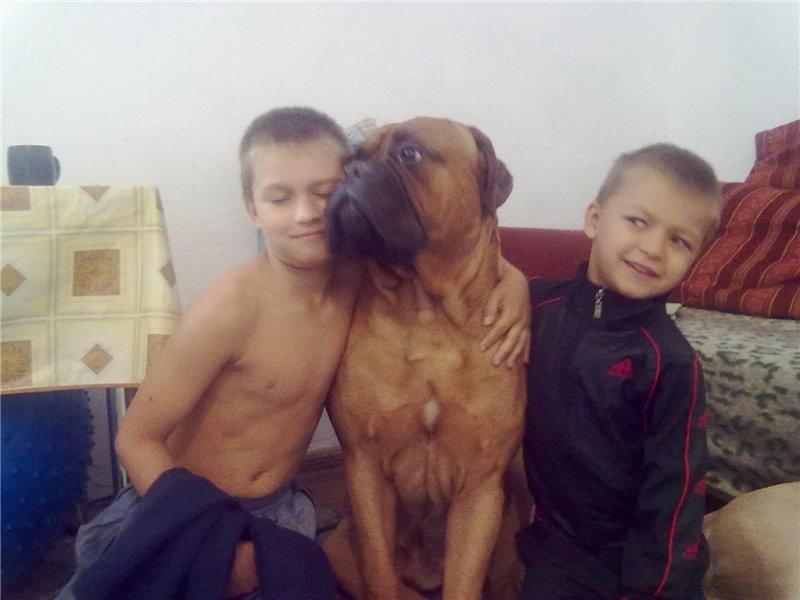 """Фотографии """"Бульмастиф и дети"""" 0d2b1c52b7a2"""