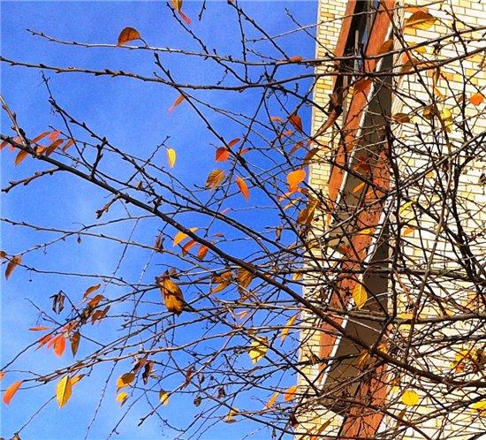Осень, осень ... как ты хороша...( наше фотонастроение) - Страница 7 D63d5932be79