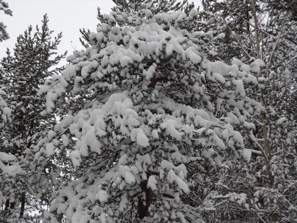 Зимняя сказка на наших фотографиях - Страница 14 8e818a2ca920