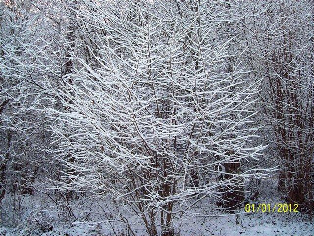 """Конкурсные работы """"Причуды Зимы"""" Cd16572e0ff1"""