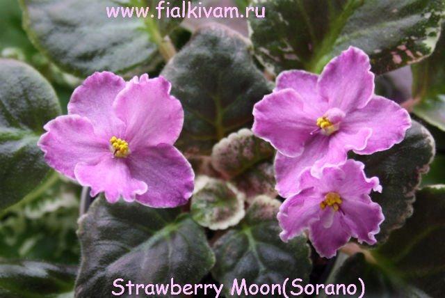 Растения от FILIGERa - Страница 23 6c0c3d349495