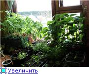 Овощи - Страница 5 B5019e8c9773t