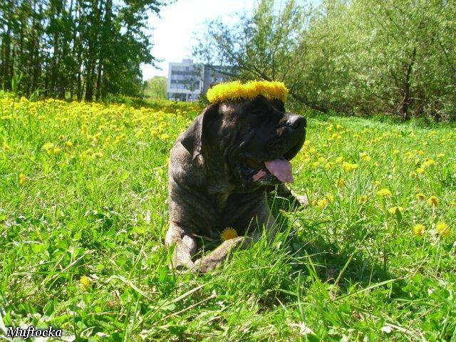 Собаки Татьяны Моисеенковой, кот Мензурка - Страница 4 Cb1d72dfaf21
