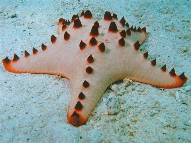 Морская звезда 5b8d0037c0e0