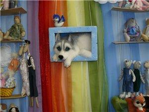 Время кукол № 6 Международная выставка авторских кукол и мишек Тедди в Санкт-Петербурге - Страница 2 Ae602e0368aat