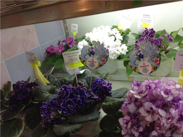 Выставка цветов Fec112bfdbdd