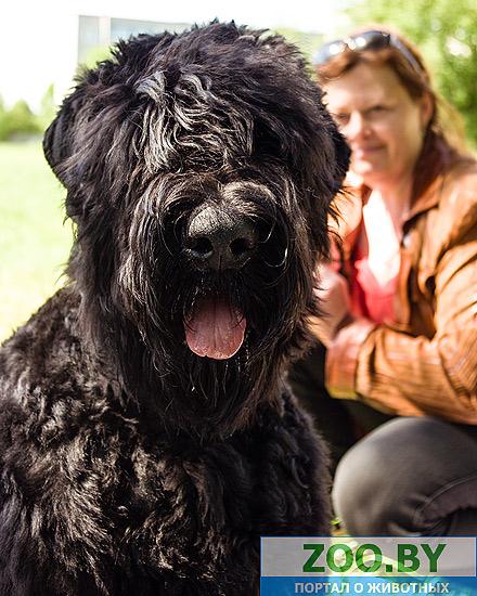 19 мая, Молодечно, Республиканская выставка собак всех пород 21a824164bbf