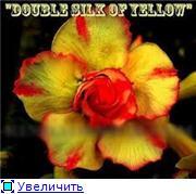 продам семена экзотических растений - Страница 3 900a3f396092t